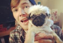 #teamtdm new member the pugs / Such a cute dog