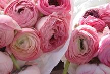 Flowers / by Cristina Quattlebaum