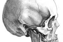 Skeleton and skull ref