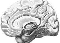 Citát - Roman Sovič / Velikost inteligence spočívá v porozumění a pochopení skrytých souvislostí a jejich dalšího rozvíjení a využití, aby to ostatním přinášelo smysl a uspokojení!!!   Výška inteligence je přímo úměrná činům a výsledkům každého jedince!!!   Je to umění pracovat s abstraktními představami a menit je ve své sny!   PI je toho důkazem!   Citát - Roman Sovič