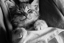 cat ♥♥♥