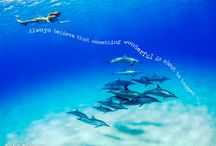 Quoteable Mermaid / All quotes mermaid and ocean related from Finfolk Productions.