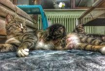 Kedi Şeysi (Cat)