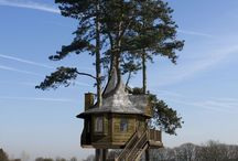 treehouse / by Suzanne