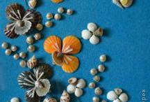deniz kabuğu işleri