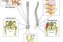 FISIOLOGIA, Fisioterapia / Corpo Humano
