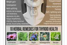 glande thyroide plantes narurelles