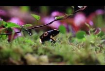 Dart Frogs  & their homes