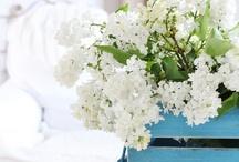 Flowers / Vackra blommor