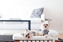 Lola Inspirations :: Dogs we ❤️