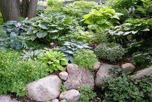 oak hill > garden