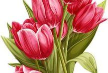 изо цветы