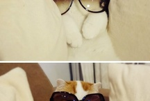 Pet Humor / by LUXE Paws