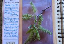 Waldorf school botany project