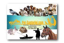 Pet Shop Santorini-ΣΑΝΤΟΡΙΝΗ