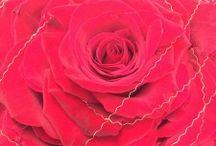 CURSOS GALACTICBLUM / Galacticblum al servicio del profesional organiza cursos y master class puntuales para la formación artesanal del florista y decorador.