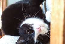 Cats :: Advice, Tips and Tricks / For pet parents, there's always something new to learn! Explore helpful info for cat parents here.
