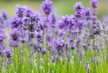 Flowers & Gardens / by Bonnie Rivard