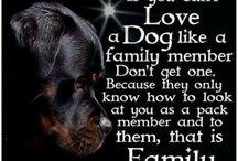 Dogs-i love u