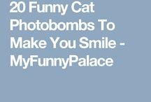 Chats drôles