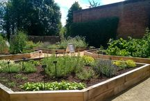 Physic Garden / Dr Jenner's Physic Garden was built in 2016 by our team of garden volunteers. Follow to find out about the project as well as the history of medicinal herbs.