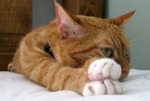 I <3 My CaT....