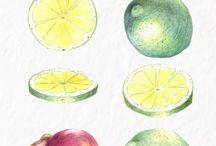 Freebies / Free illustrations by Ryogo Design