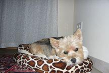 Lola / Hunde