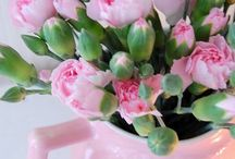 CarnationsГвоздики