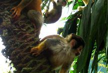 Monkeys, Gorillas & more of the World / Monkeys & more