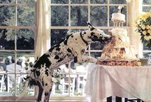 Pet in Weddings! / We love this - such great ideas and cute pictures!