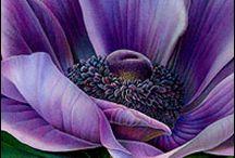 Art: Susannah Blaxill, watercolorist