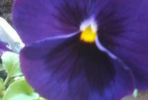 çiçek dünyası