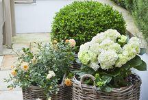 Gardens / #garden