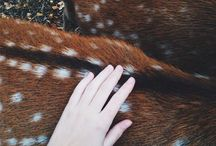 ;animals;