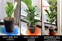 Garden - Indoor Plants