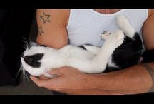 Cats attachment to humans