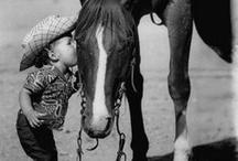 horses&ponies / by Emily Gerdes