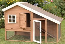 Farmhouse :: Animals