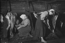 Fattorie Didattiche / La fattoria didattica si fonda sul bisogno di agricoltura della nostra società, offre una risposta pratica, gradevole e culturalmente alta all'esigenza di ritrovare le nostre radici. (Carlo Hausmann)