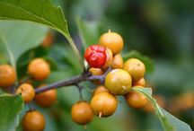Poisonous Plants / Some plants can be poisonous if you eat them. Others can hurt you if you get them on your skin.