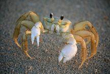 Beach_critters