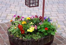 Virágok hordóban/Flowers in barrel