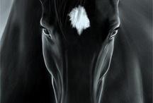 sólo caballos