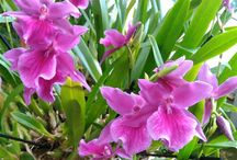 Pasta  de flores  orquídeas