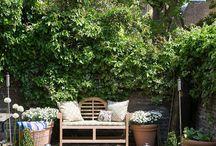 garden // kert