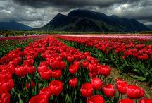 Beautiful British Columbia / by Cari Anne