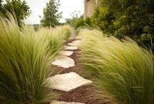 garden_grasses
