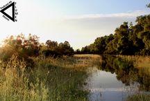 Flumen Agosto 2013
