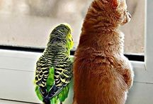 Animals ~ Unexpected Friends / Sometimes friendship crosses all borders, even species!